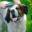 Pet care information and cute images!  Find tips for grooming pets and pet supplies!