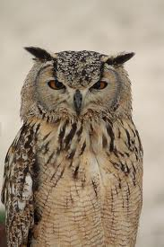 Find bird facts and fun trivia about owls!