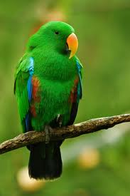 Find bird facts and fun trivia about parrots!