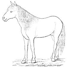 Learn how to draw a horse!  Find cool horse images!  Find horse facts, fun trivia and more!
