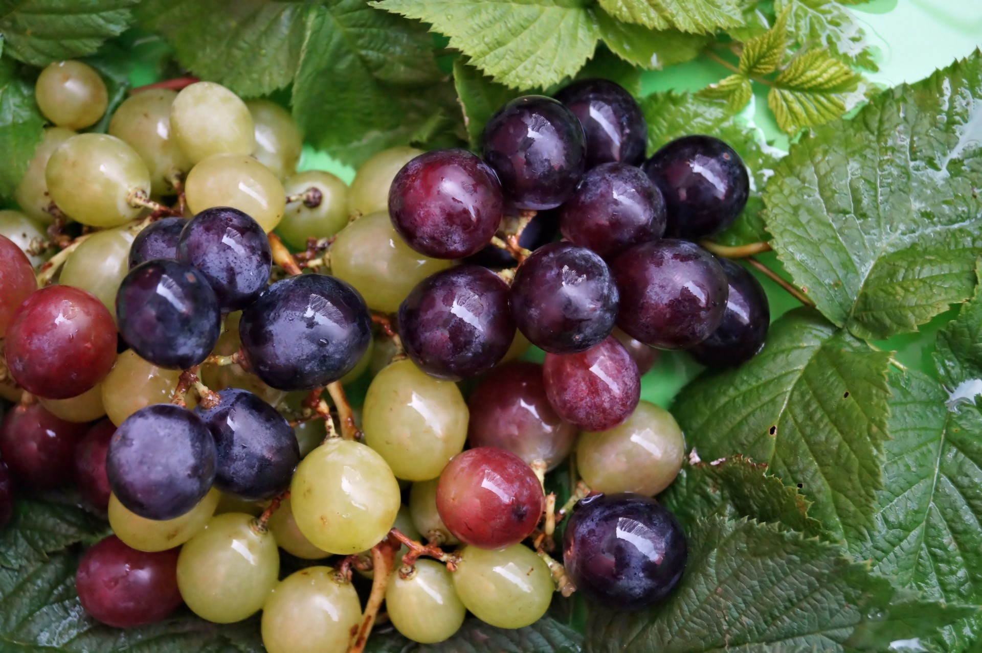Discover benefits of grapes for the body, skin and hair!  Grapes are known as the