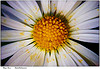 A daisy symbolizes a friendly flower.  Find fun trivia!  Learn the parts of a flower!