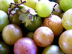 The muscadine grape has a unique balance of phytonutrients, resveratrol and ellagic acid.  It's known as the
