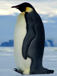Find bird facts and fun trivia about penquins!