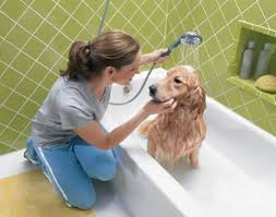 Pet care information with cute images!  Find tips for grooming pets and pet supplies!