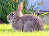 Bunny coloring pages are fun activities for kids!  Find fun kids games too!