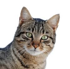 Pet care information with cute images!